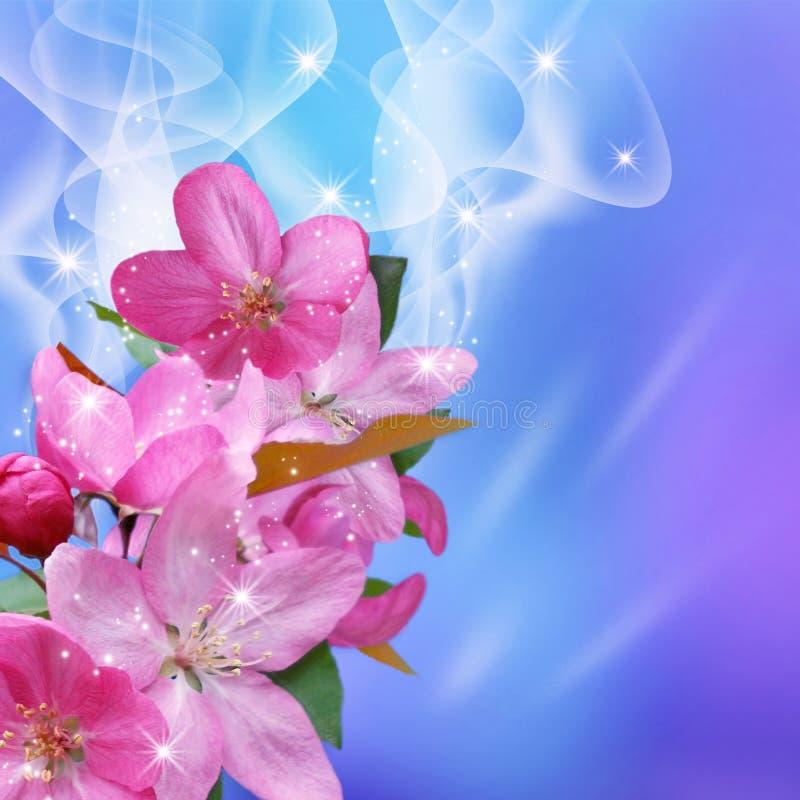 Sparkling sakura stock photography