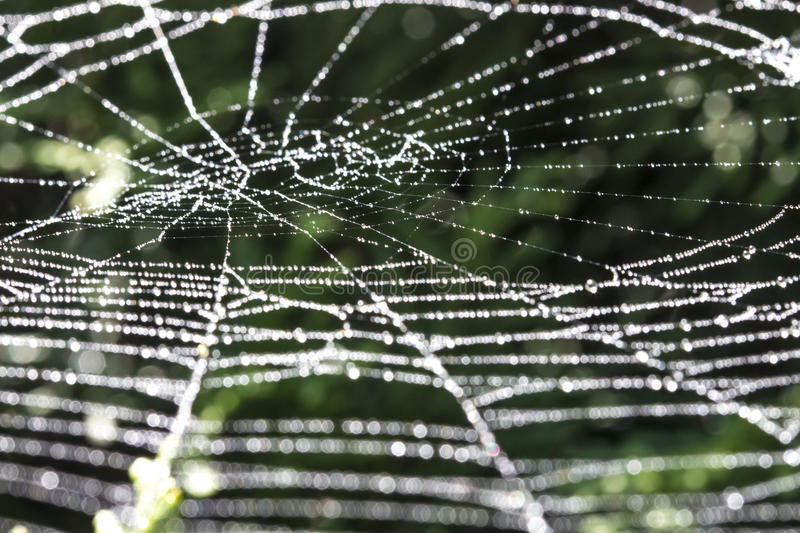 Download Sparkling spiderweb stock photo. Image of background - 26225598
