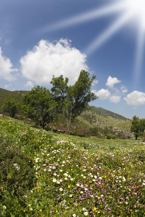 The sparkling spring sun. And blossoming hills of the Mediterranean royalty free stock images