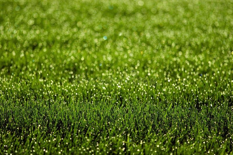 Sparkly Grass Stock Photo