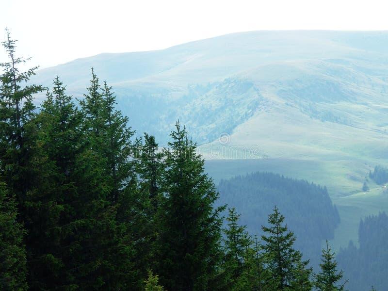 Sparren en bergen royalty-vrije stock afbeelding
