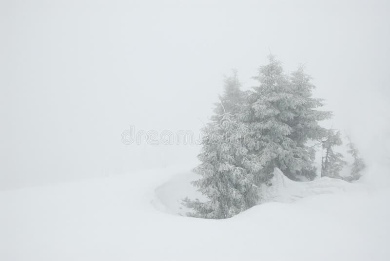 Sparren in sneeuwonweer stock afbeeldingen