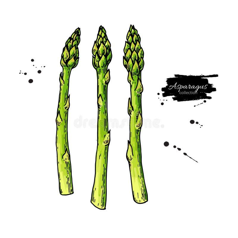 Sparriers r?cker den utdragna vektorillustrationen Isolerat färgrikt objekt för grönsak arkivfoto