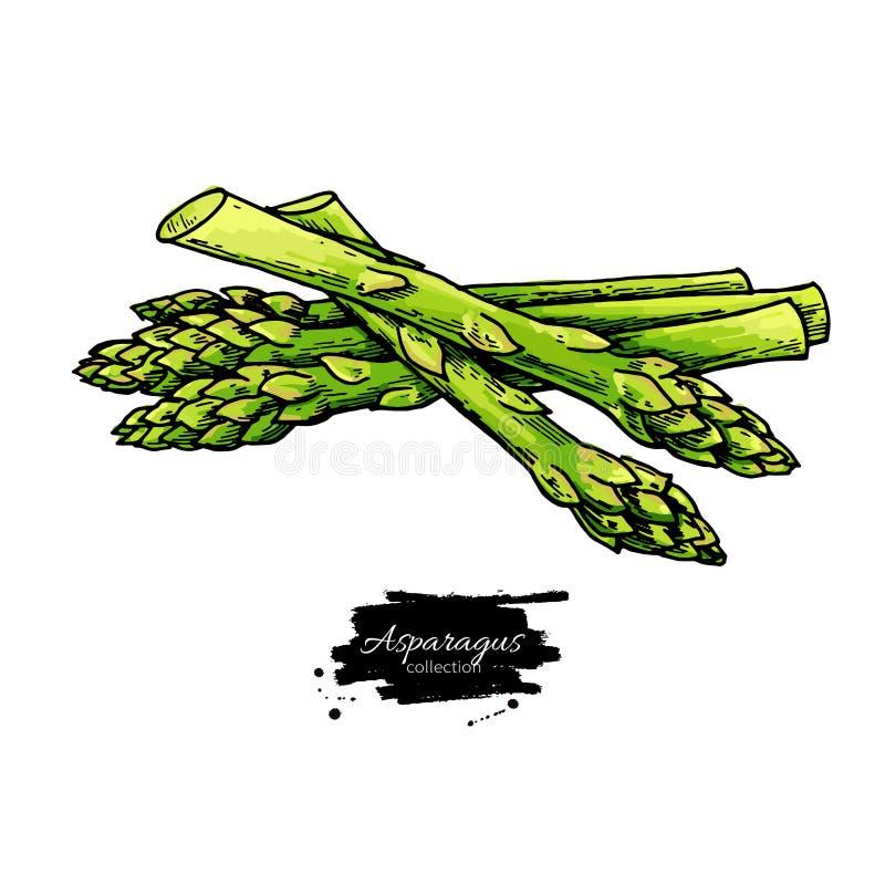 Sparriers r?cker den utdragna vektorillustrationen Isolerat färgrikt objekt för grönsak royaltyfria foton