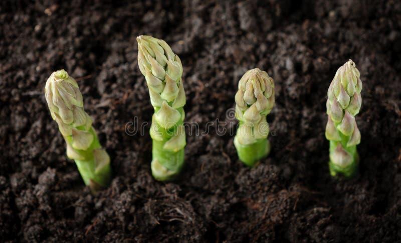 sparrisjordbruksmarkgreen arkivfoton