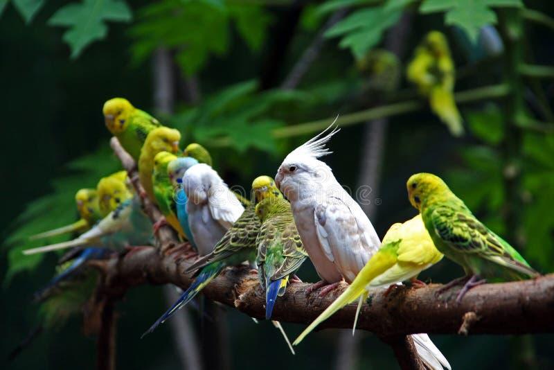 Download Sparrow stock photo. Image of sparrow, white, animal - 11773734