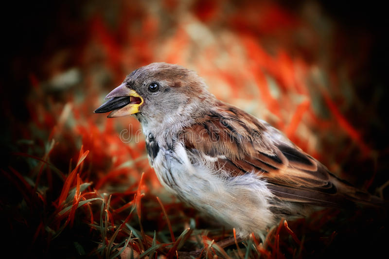 Download Sparrow Stock Photo - Image: 25354170