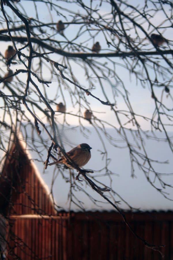 Free Sparrow. Stock Photo - 7854370