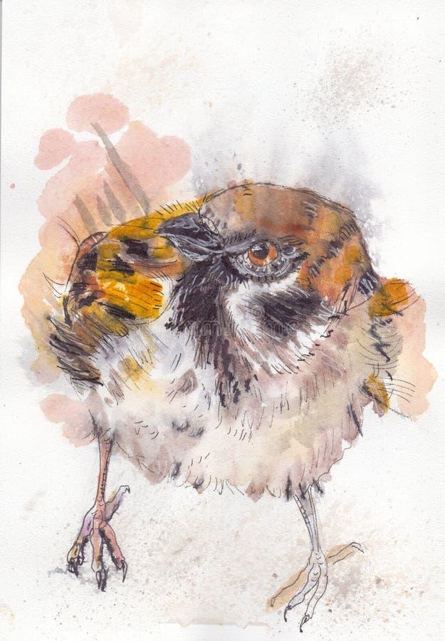 Sparrow3 photographie stock libre de droits