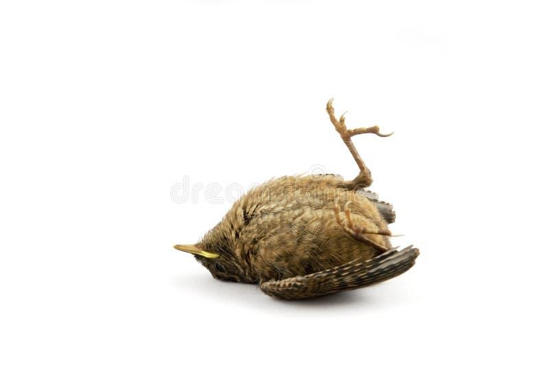 sparrow dziecka fotografia royalty free