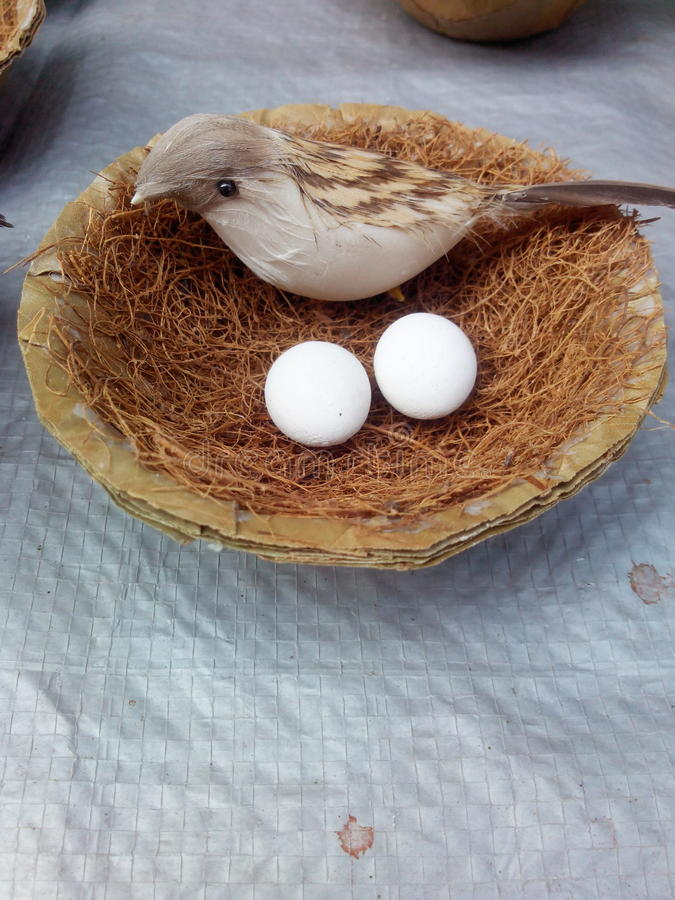 Sparrow. With eggs in the nest closeup click stock images