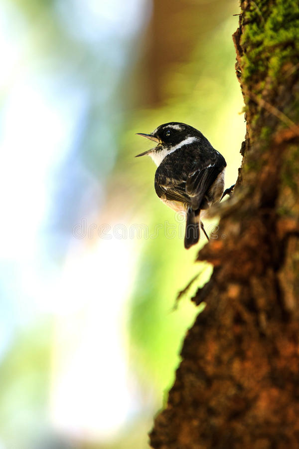 Download Sparrow stock image. Image of sparrow, small, branch - 36986417