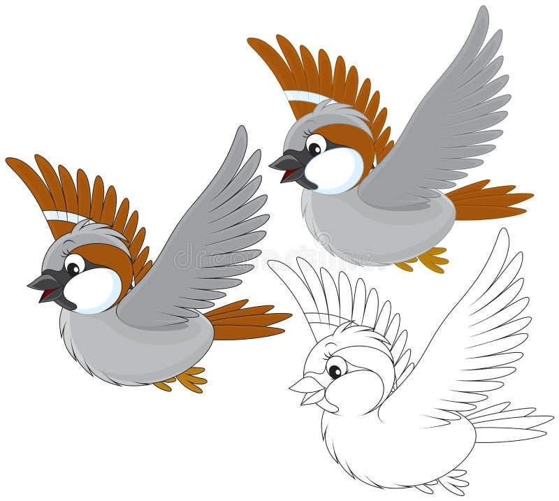 Sparrow stock illustration