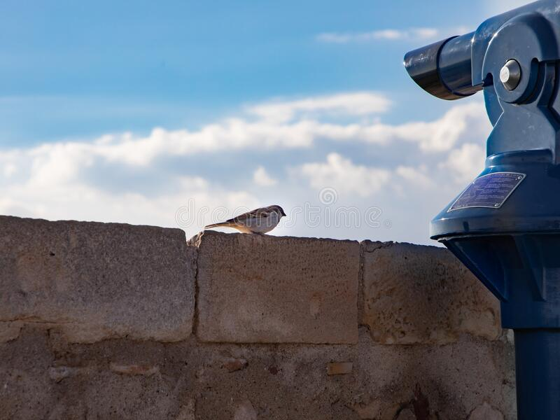 Sparrow on the observation deck. Curious sparrow at the telescope on the observation deck in Peniscola stock photography