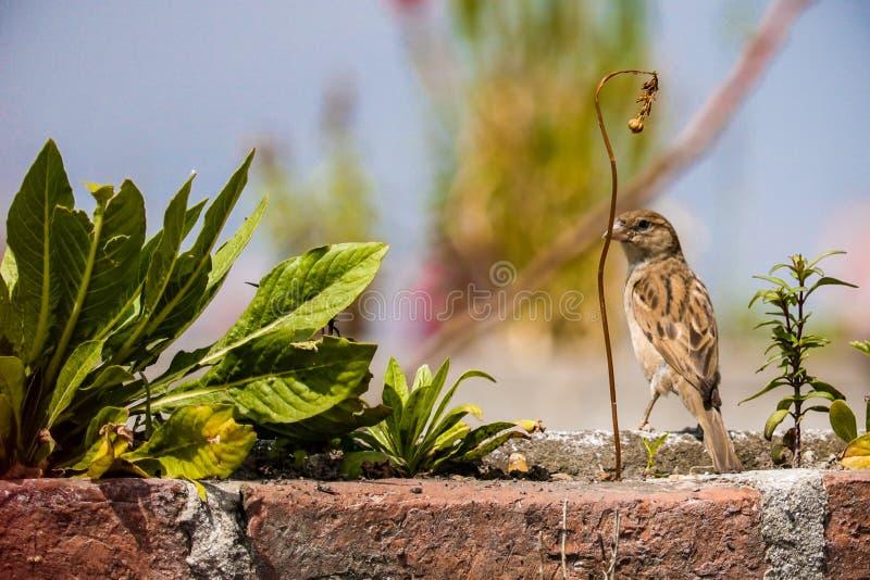 Sparrow och anläggning royaltyfri fotografi