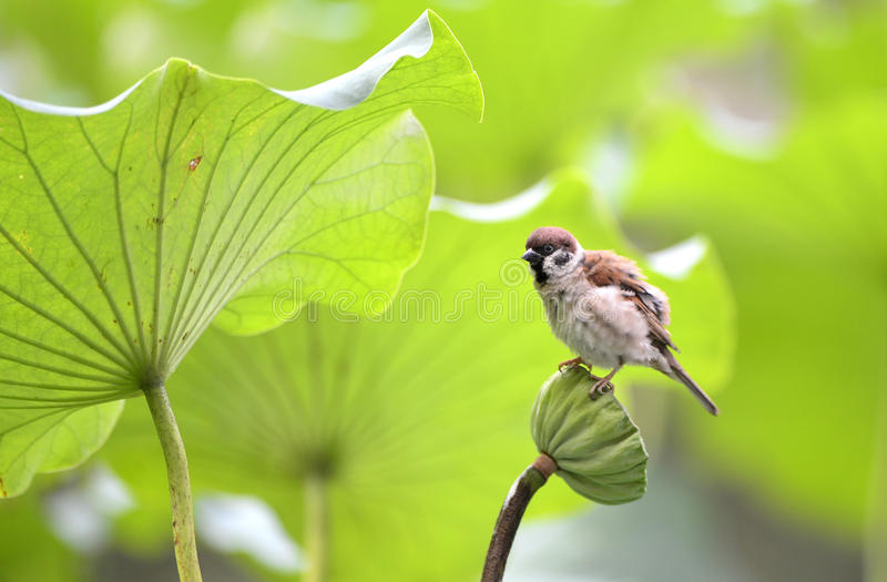 Download Sparrow Pond Stock Images - Image: 32967854