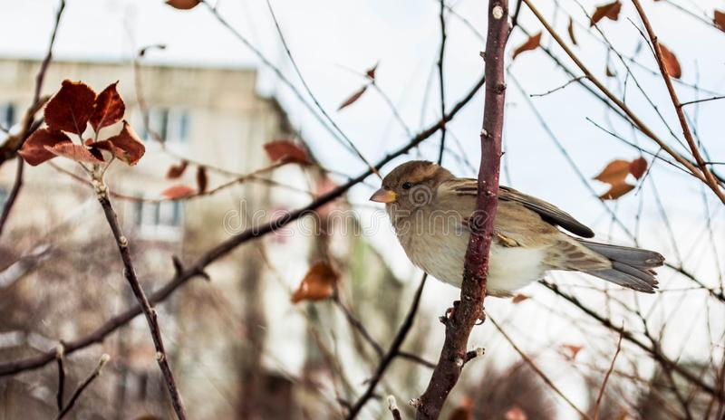 Sparrow on a tree stock image