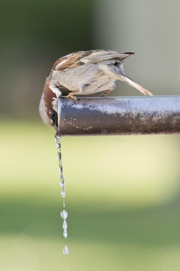 Sparrowdricksvatten. royaltyfri bild