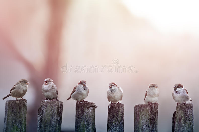 Sparrows royaltyfri bild