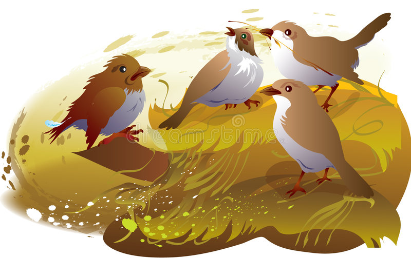 Sparrows Stock Image