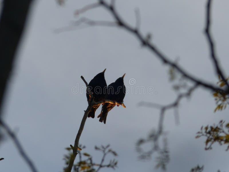 sparrows immagini stock libere da diritti