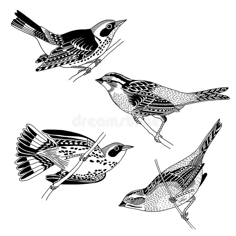 Free Sparrows And Warblers Stock Image - 91554121