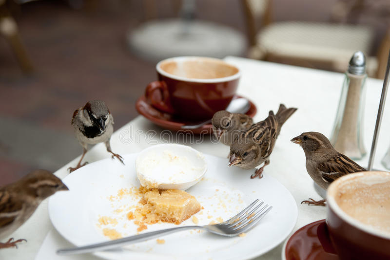 Sparrows nuisance on cafe table. stock images