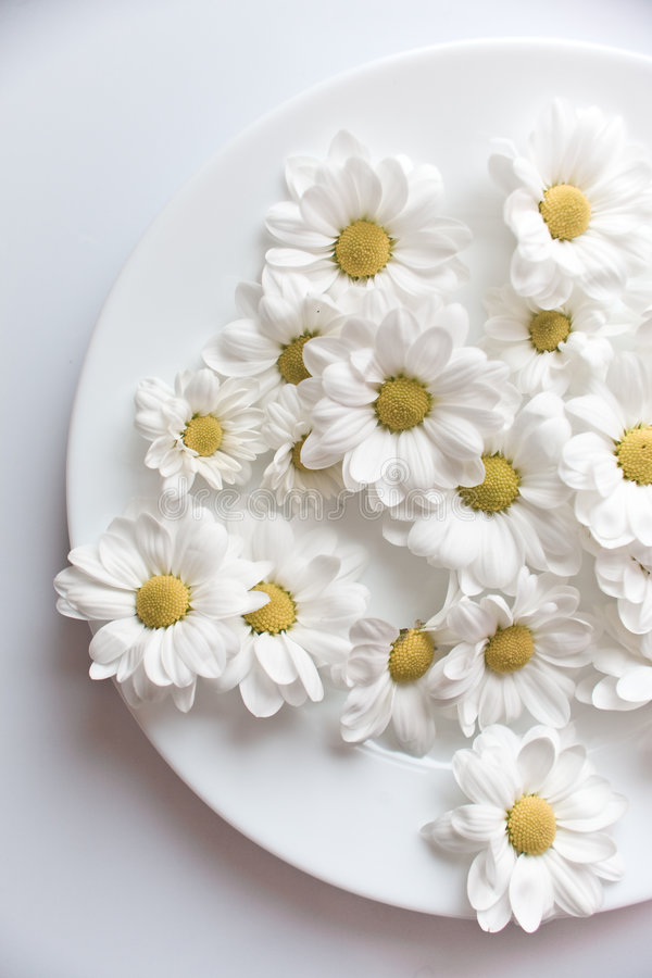 Sparse flowers. Sparse white chamomiles on a plate stock image