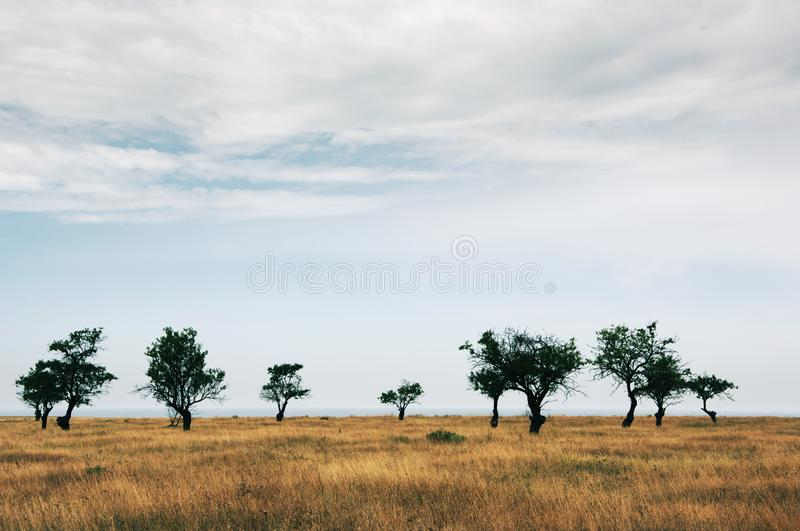 Sparse trees in dried prairie. Against cloudy sky stock photo