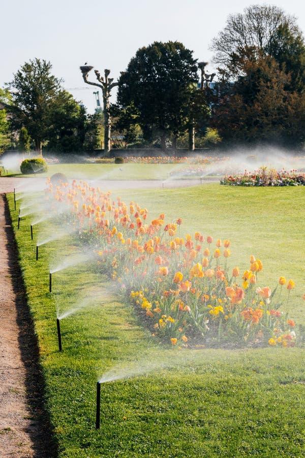 Spart-Garten mit Arbeitsberegnungsanlage, stockbilder
