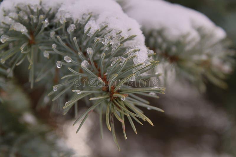 Spartak onder sneeuw en met ijs dichte omhooggaand stock afbeelding