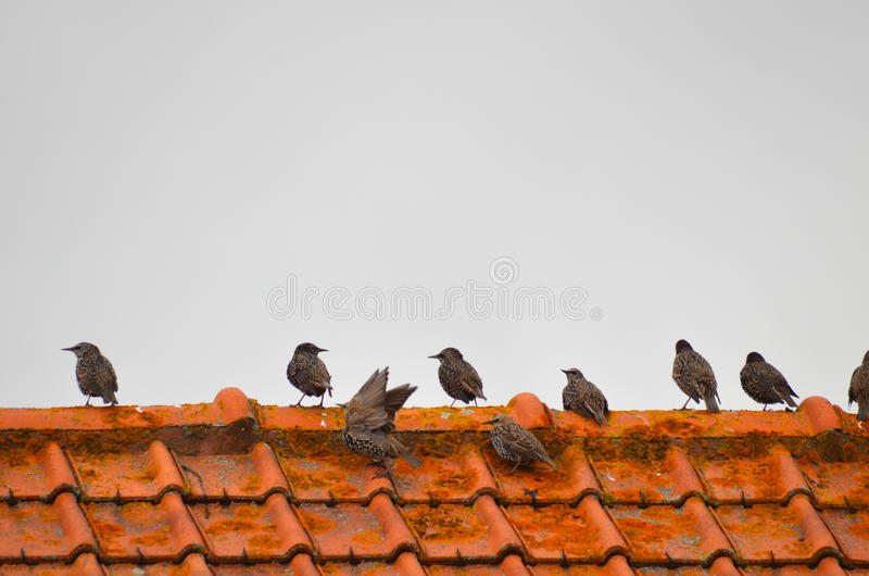 Download Sparvar arkivfoto. Bild av sparrow, sitting, utgångspunkt - 37344578
