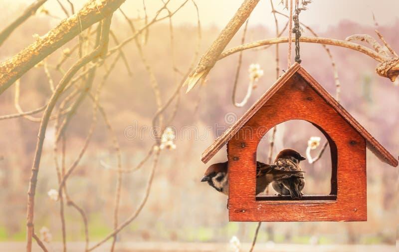 Sparvar i trämatningsho var för fåglar Handgjord voljär royaltyfria foton