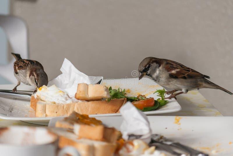 Sparvar som äter från plattan arkivbilder