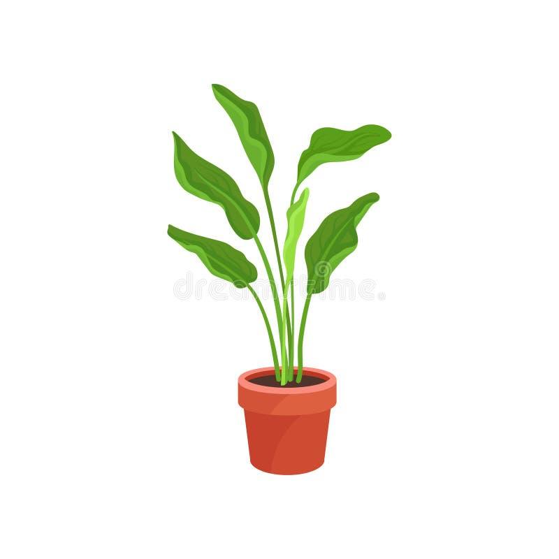 Spathiphyllum或和平百合在棕色陶瓷罐 与长的鲜绿色的叶子的室内植物 家的平的传染媒介元素 库存例证