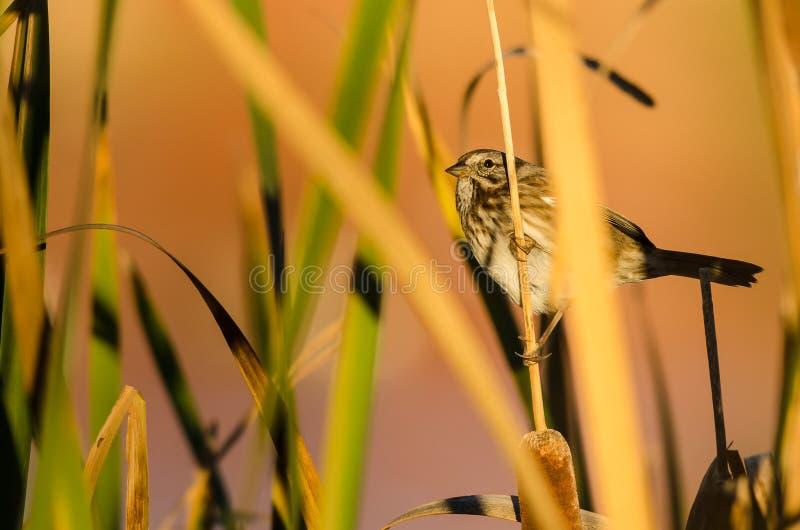 Spatz, der unter dem Herbstlaub stillsteht stockfoto