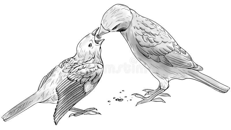 Spatz zieht Vogelbaby ein lizenzfreie abbildung