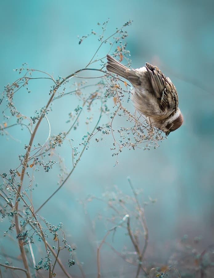 Spatzen-Vogel, der auf altem Stock sitzt Gefrorener Spatzen-Vogel-Winter PO stockbild