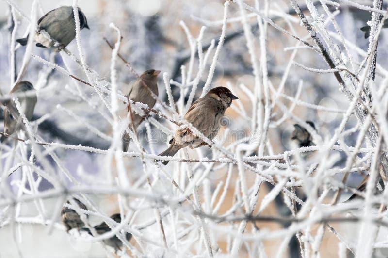 Spatzen ziehen ` t Sorge über die Kälte an stockbild