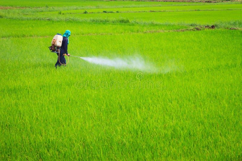 Spaying o insecticida fotos de stock