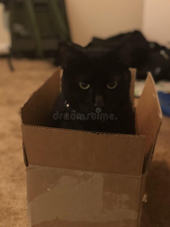 Spaz el gato foto de archivo