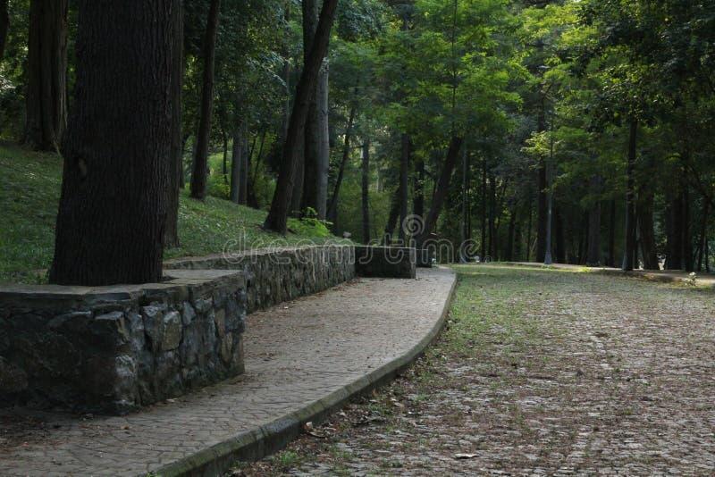 Spazi di sosta boscosi e fare un giro turistico che fanno un'escursione area immagine stock libera da diritti