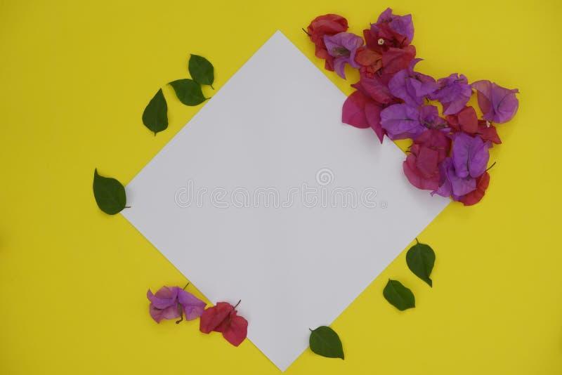 Spazio bianco vuoto per testo o immagine su fondo giallo e sui fiori rosa fotografia stock