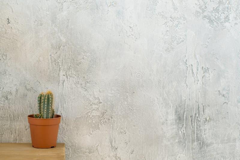 Spazio della copia dell'apprettatrice del cactus di stile del sottotetto della flora fotografia stock