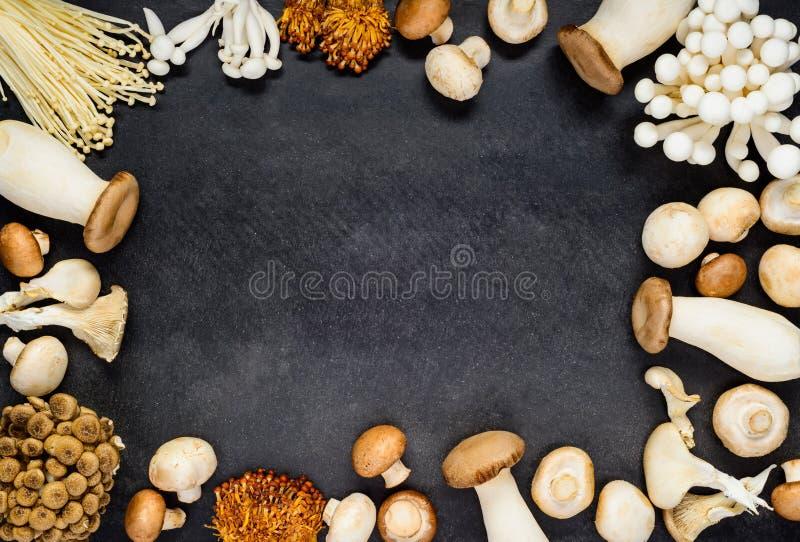 Spazio della copia della struttura dei funghi fotografia stock