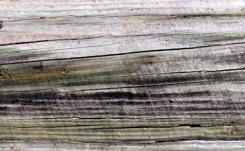 Spazio di legno della copia di struttura del fondo del grano immagini stock libere da diritti