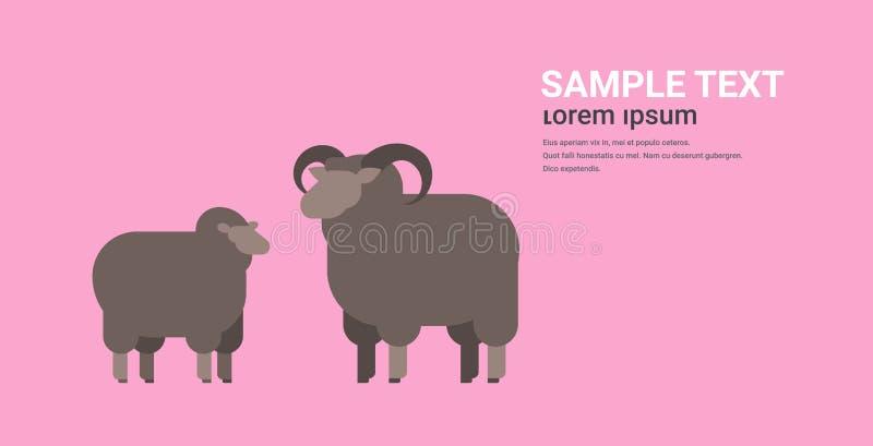 Spazio orizzontale piano crescente sveglio della copia di concetto degli animali domestici dell'azienda agricola della lana della illustrazione vettoriale