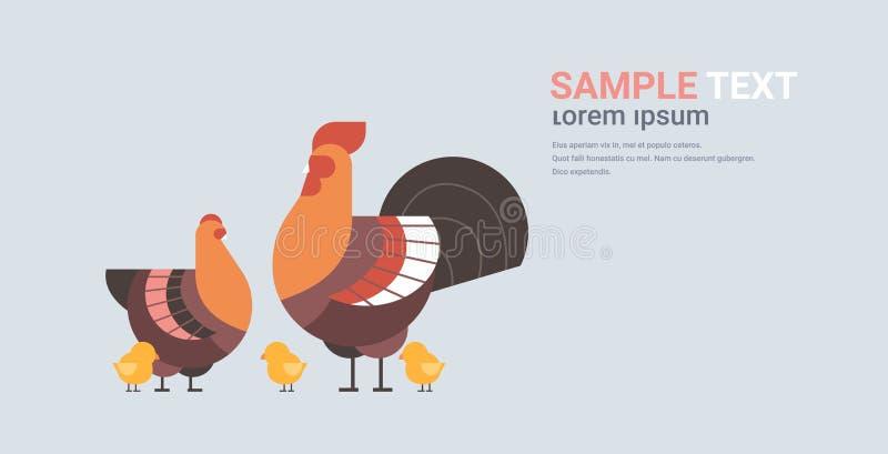 Spazio orizzontale piano sveglio della copia degli uccelli del gallo e del pulcino della gallina del fumetto della famiglia del p illustrazione vettoriale