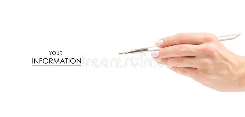 Spazzola per il modello femminile della mano di bellezza dei cosmetici del sopracciglio del fronte fotografia stock