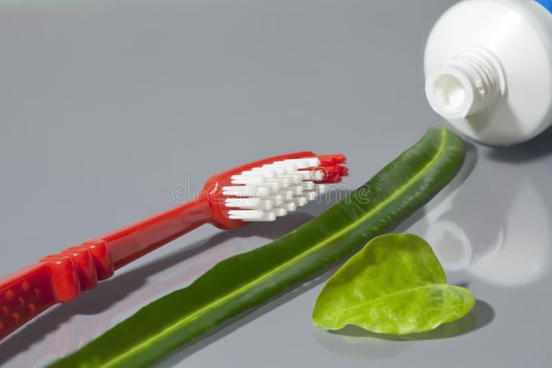 Spazzolino da denti e tubo di dentifricio in pasta aperto con le foglie verdi fotografia stock